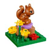 Andrea's Mountain Hut - Squirrel